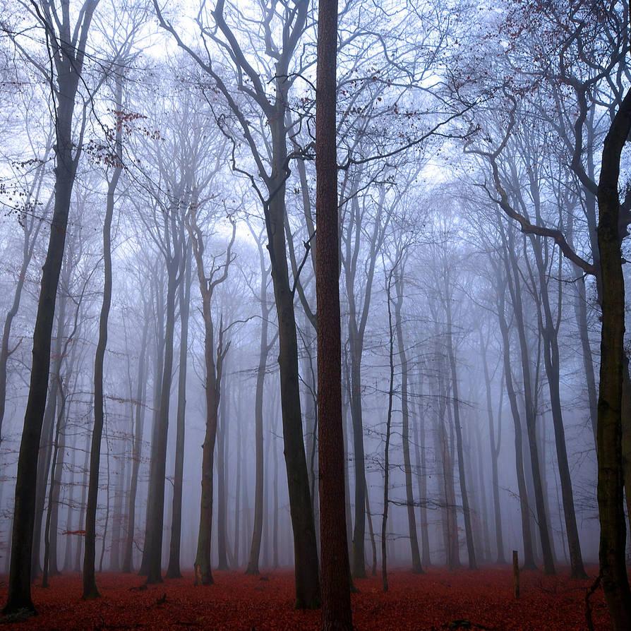 december forest by augenweide