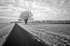 Silence around by augenweide