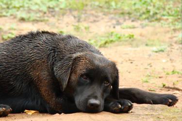 Dog Logan by Mraul