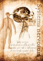 Systema nervosum... by EugeneStanciu