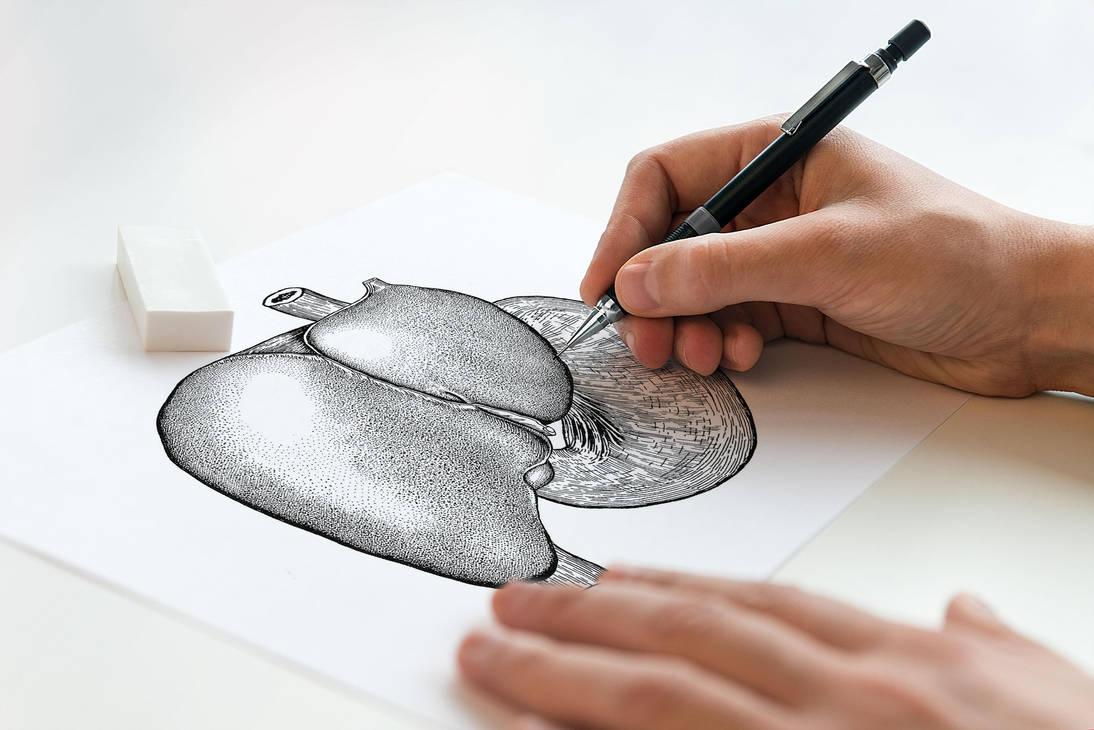Anatomie - Foie + Estomac by EugeneStanciu