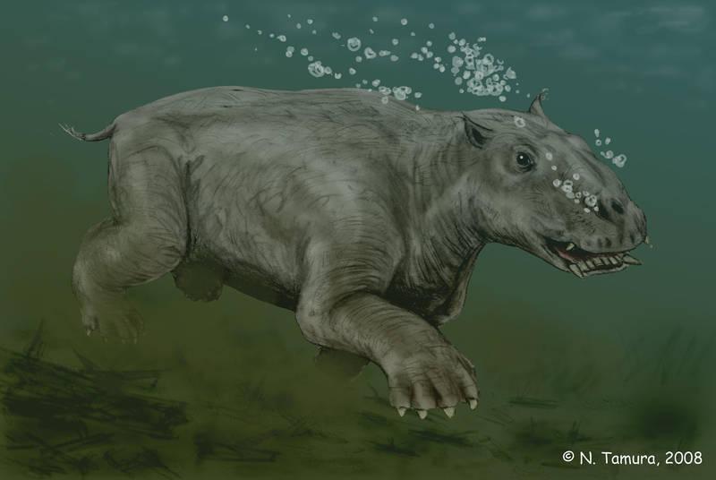 Paleoparadoxia by NTamura