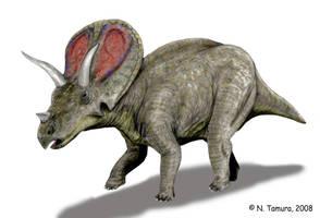 Torosaurus by NTamura