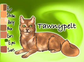 Tawnypelt of ShadowClan - Faded Boundaries by Jayie-The-Hufflepuff