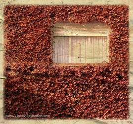 window_by_ine87 by Canon400D