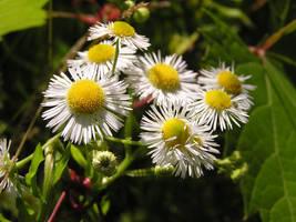Flower stock by TheKaykat-Stock