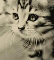 miau by fialk-enson