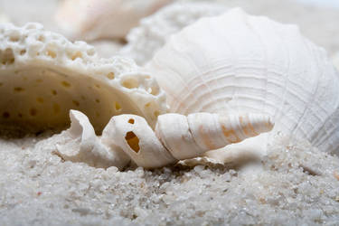 Sea Shells not at the sea..... by photoJunknStuff