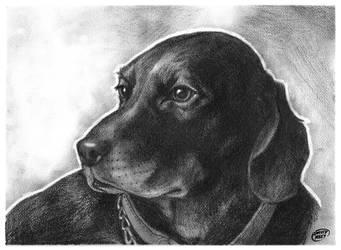 Pet Portrait pencils by DAVIDGMILEY
