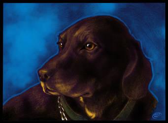 Pet Portrait colors by DAVIDGMILEY