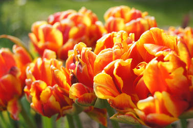 spring fever by Bumpler