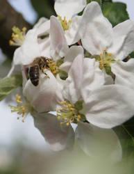 spring spring spring :) by Bumpler