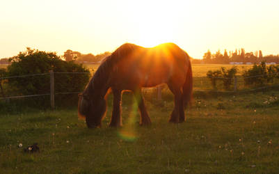 Horse in Sunset by Bumpler