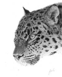 snow Leopard by gnux429