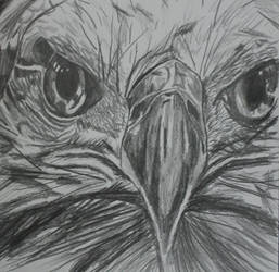 Bold Eagle sketch by IszyChurch