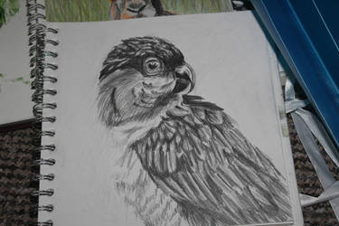 caique parrot sketch by IszyChurch