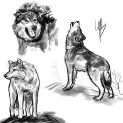 Wolves - practise by bewhale