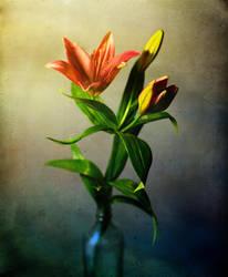 Lily Dreams by justinblackphotos