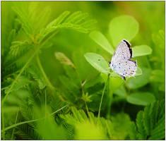 Divine Creation by justinblackphotos