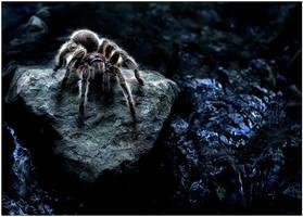 Night Crawler by justinblackphotos