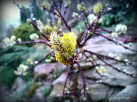 Spring Flower 2012 - 22 by Ingnition