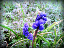 Spring Flower 2012 - 24 by Ingnition