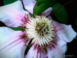 Spring Flower 2012 - 74 by Ingnition
