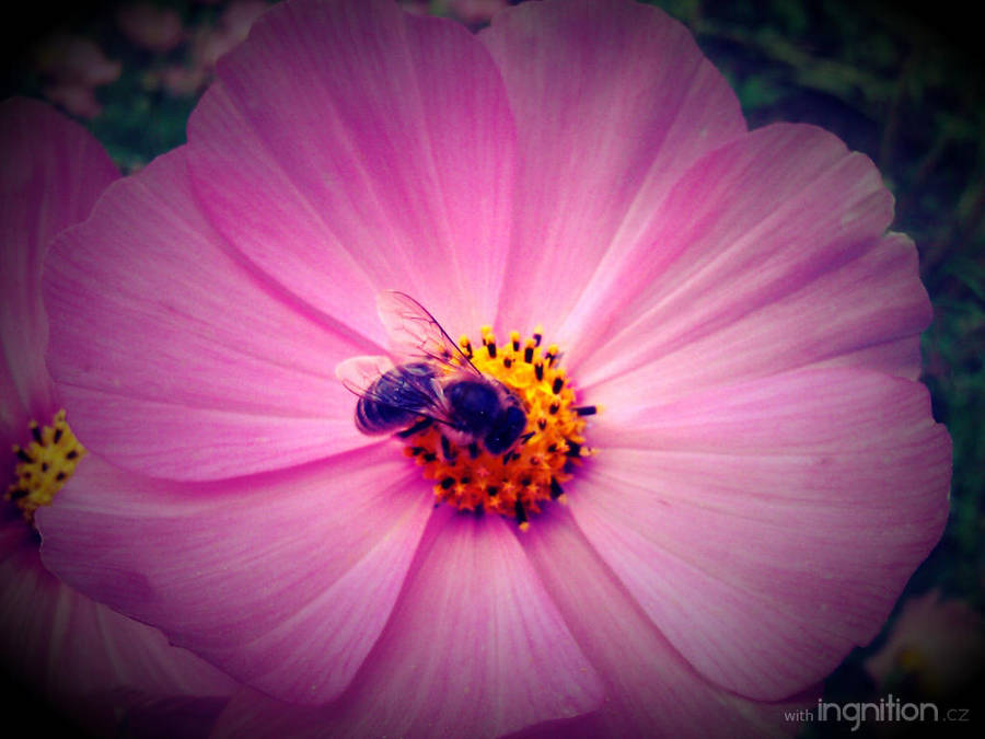 Summer Flower + Bee 2012 - 14 by Ingnition