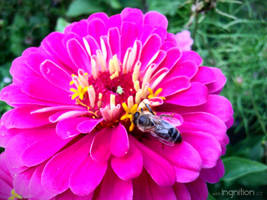 Summer Flower + Bee 2012 - 19 by Ingnition