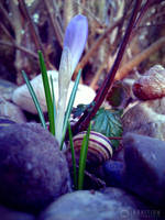 Photogallery 2014 - 06 flower snail by Ingnition