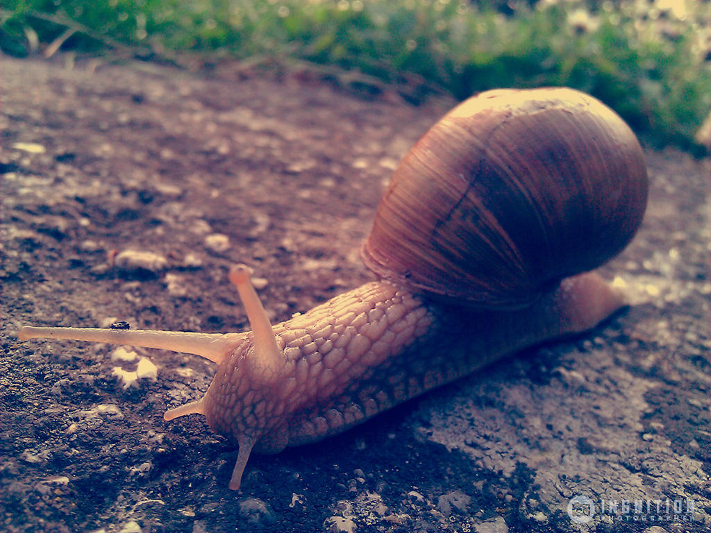 Photogallery 2014 - 15 snail by Ingnition