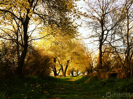 Photogallery 2015 - 07 spring dream by Ingnition by Ingnition