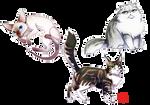 Cats Cats Cats!! by Sanatio