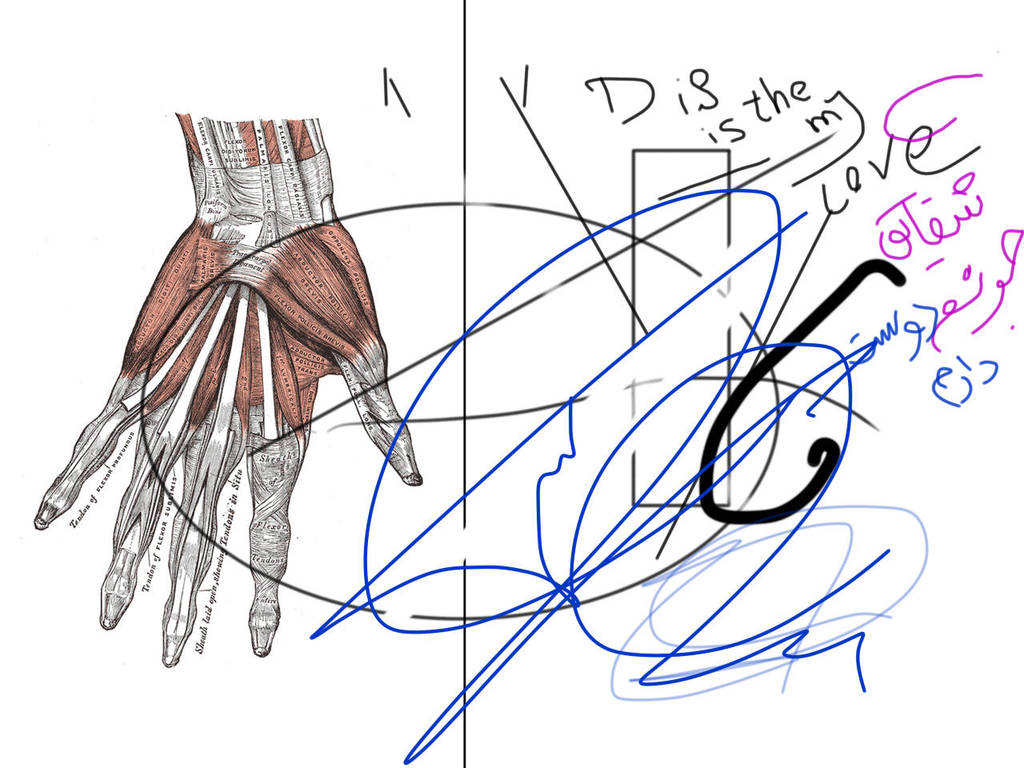 Anatomy The Hand Muscles By Nfeyz On Deviantart