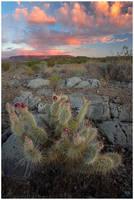 Barren Colors by michael-dalberti