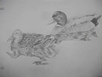 Ducks by OkiHorse