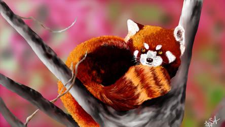Red Panda by OkiHorse