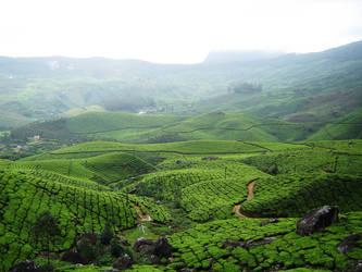 Tea Plantation Hills 1 by Alienesse-Stock