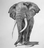 Bull Elephant by mickoc
