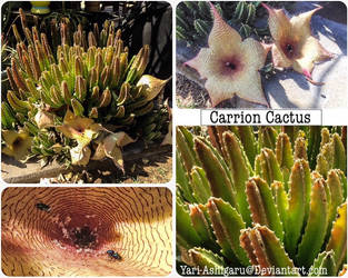 Carrion Cactus by Yari-Ashigaru