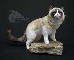 Grumpy Cat Room Guardian by AnyaBoz