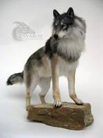 Grey Wolf Room Guardian by AnyaBoz