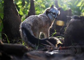 Grey Fox Room Guardian by AnyaBoz