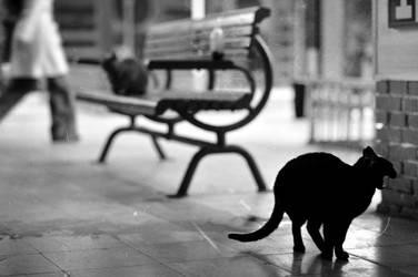 On the street by omuryilmaz