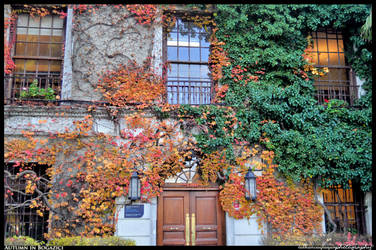 Autumn in Bosphorus University by BeYounique