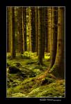 Kielder Forest 2 by newcastlemale