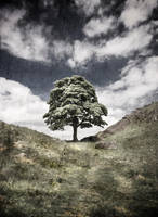 Sycamore Gap 3 by newcastlemale