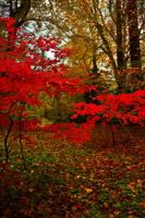 Northumberland Woodland 6 by newcastlemale