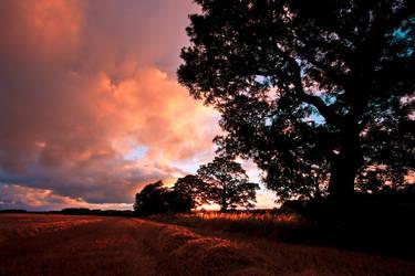 Northumberland field by newcastlemale