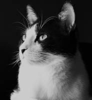 Portrait of Uli by ghosttree
